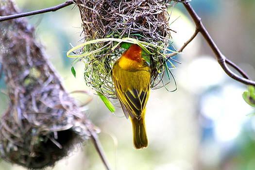 Bird at Work by Philip Neelamegam