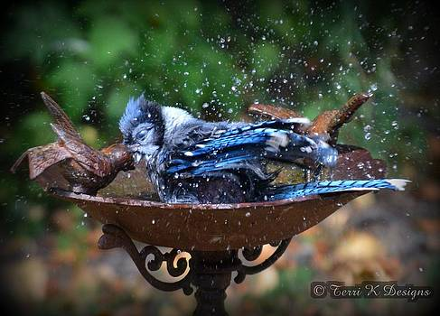 Bird Bath by Terri K Designs