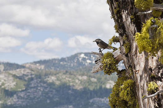 Bird Chilling by Joel Moranton