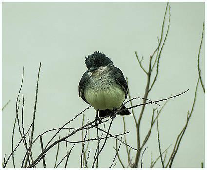 Bird by CSH Photography