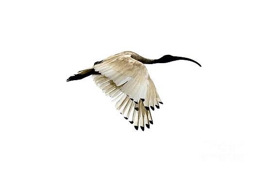 Bird by David Benson