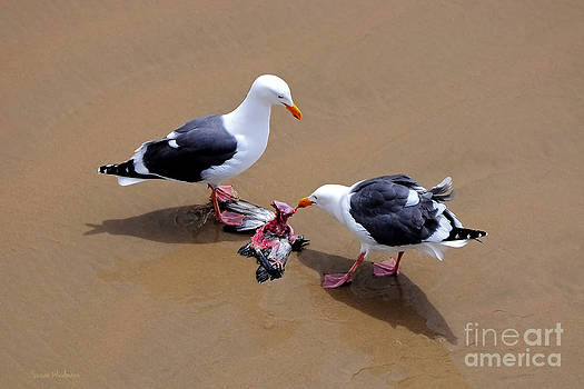 Susan Wiedmann - Bird Eats Bird