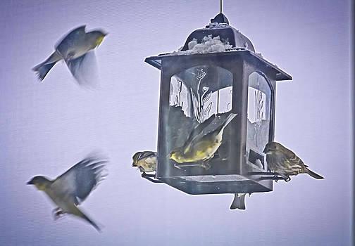 Bird Feeding Frenzy by Barbara Dean