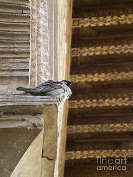 Bird Granada by Stefano Piccini