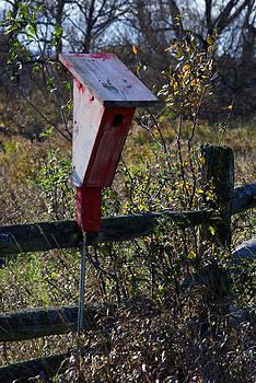 Bird House by Kelly E Schultz