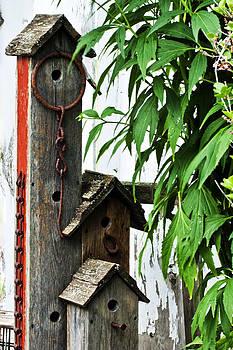 Sandra Foster - Bird House Triplex Suite