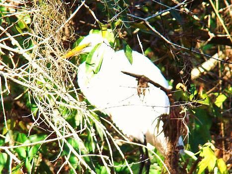 Bird in Mangroves by Van Ness