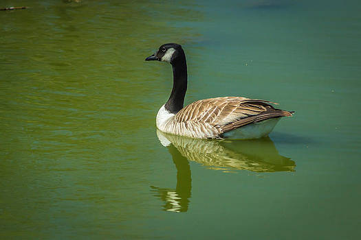 Bird in pond by Terry Thomas