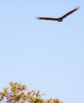 Bird in Pursuit by Van Ness
