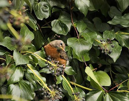 Bird in the Ivy by Elery Oxford
