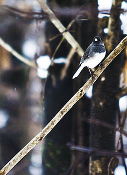Bird in the Snow by Heather Grow