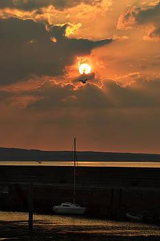 Bird in the sun by Tony Reddington