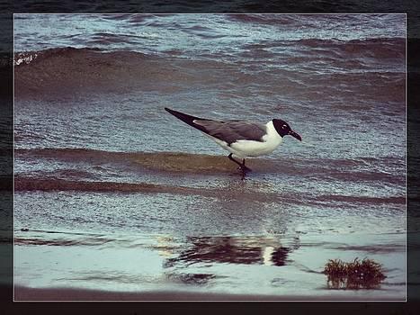 Bird landing by Anandi Godse