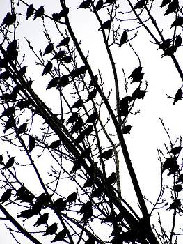 Bird Leaves by Christian Rooney