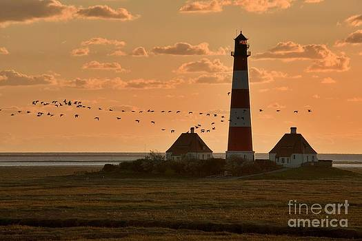 Heiko Koehrer-Wagner - Bird Migration at Westerhever Lighthouse
