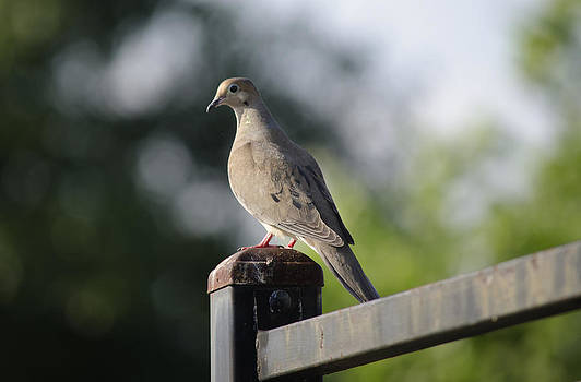 Bird by Muhammad Zahid Zeegraphy