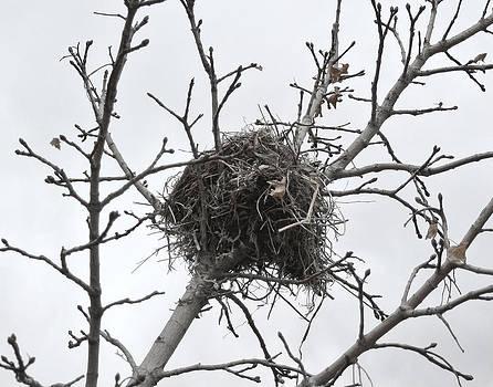 Bird Nest by Amber Davenport