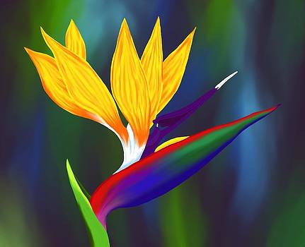 Bird of Paradise 1 by Britton Britt Cagle