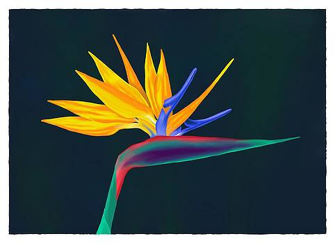 Bird of Paradise 2 by Britton Britt Cagle