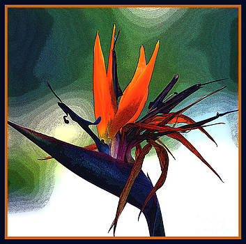 Susanne Van Hulst - Bird of Paradise Flower Fragrance