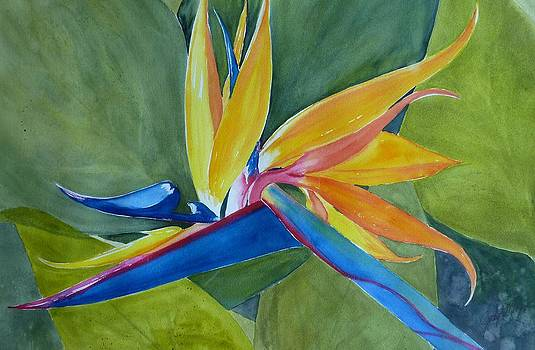 Bird of Paradise by Judy Meng