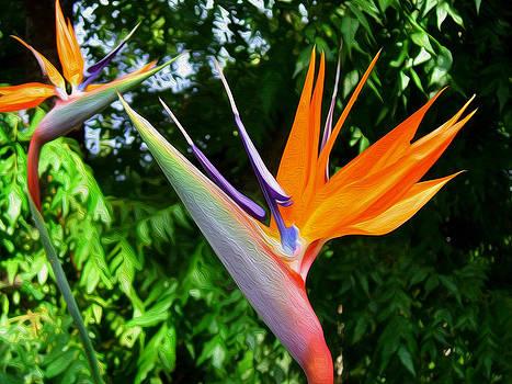 Bird Of Paradise by Kathy Bassett
