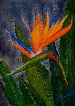Bird of Paradise by Marsha Thornton