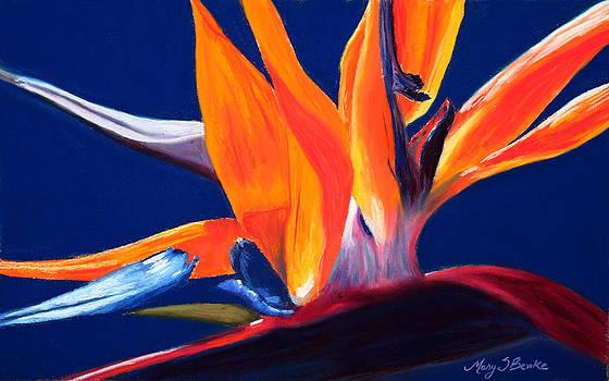 Mary Benke - Bird of Paradise