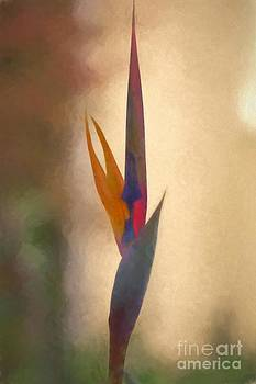 Bird of Paradise Oil Painting by Heinz G Mielke