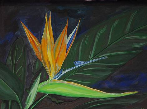 Bird of Paradise by Prasida Yerra