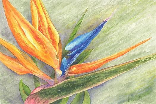 Bird of Paradise - Strelitzia reginae by Oty Kocsis