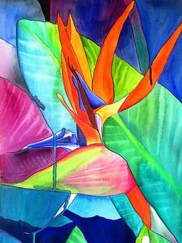 Bird of Paradise Strelitzia by Sacha Grossel