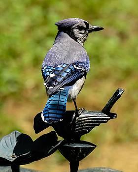 Bird on a bird by Robert L Jackson