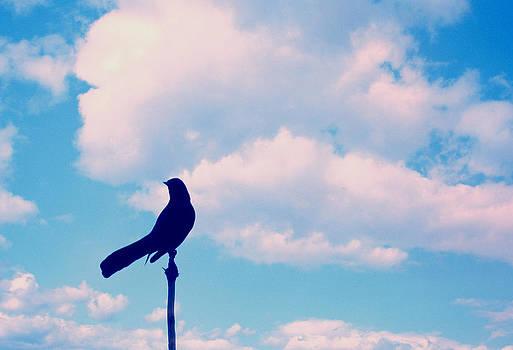 Stuart Brown - Bird on a limb
