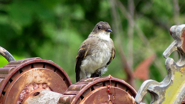 Bird on a Machine by Kimberly Mackowski
