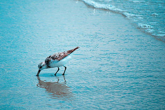 Bird on Beach by Jeffrey Cohen