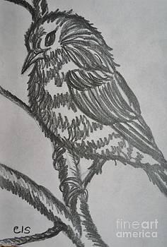 Bird on Branch by Cecilia Stevens