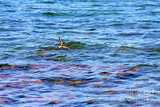 Bird on Lake Superior by Denise Woldring