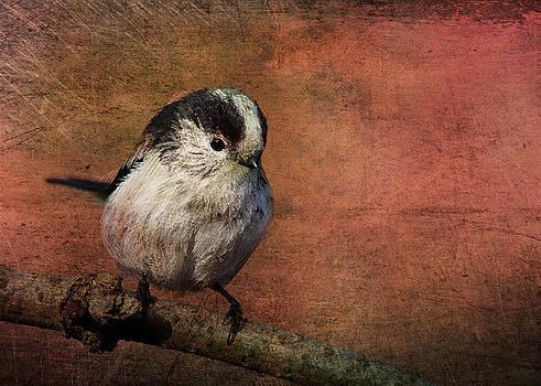 Bird on the Beam by Sarah Vernon