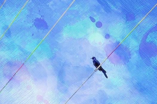 Bird on Wire by Cathie Tyler