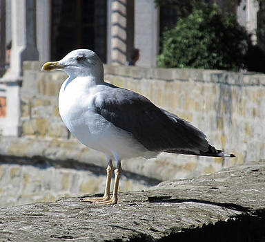 Bird by Bogdan Petrila