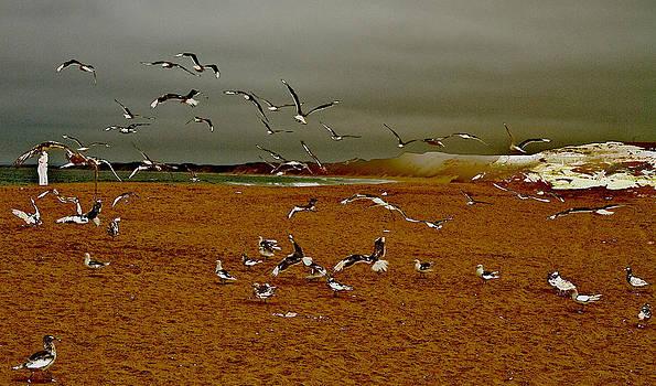 Tom Kelly - Bird Play