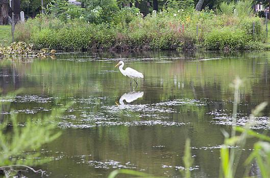 Bird Reflection in Pond by Denise Rafkind