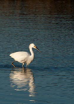 Bird Reflection by Lisa Chorny
