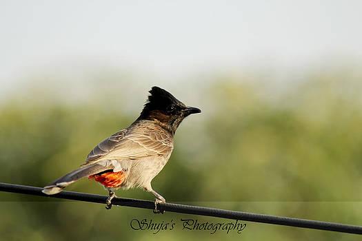 Bird by Shuja Rahman