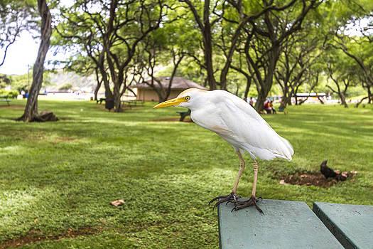 Bird Standing On The Table by Jianghui Zhang