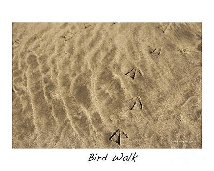 Artist and Photographer Laura Wrede - Bird Walk
