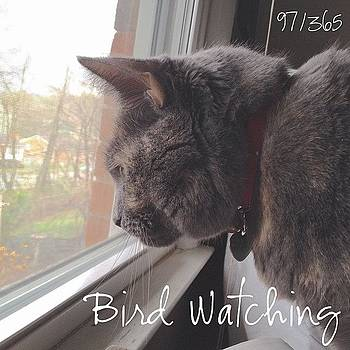Bird Watching. Dixie Is Focused On A by Teresa Mucha