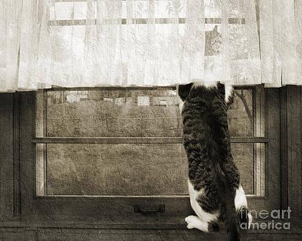 Andee Design - Bird Watching Kitty Cat BW
