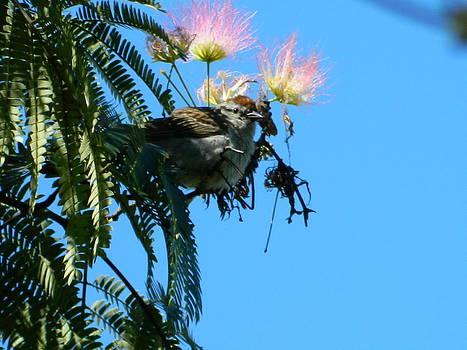 Bird watching by Linda Brown